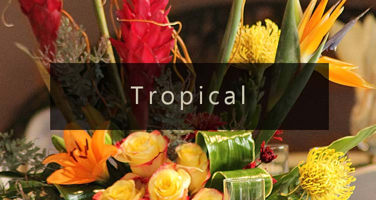 Shop Tropical Arrangements